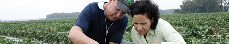 Woman and man among crops examining plant.
