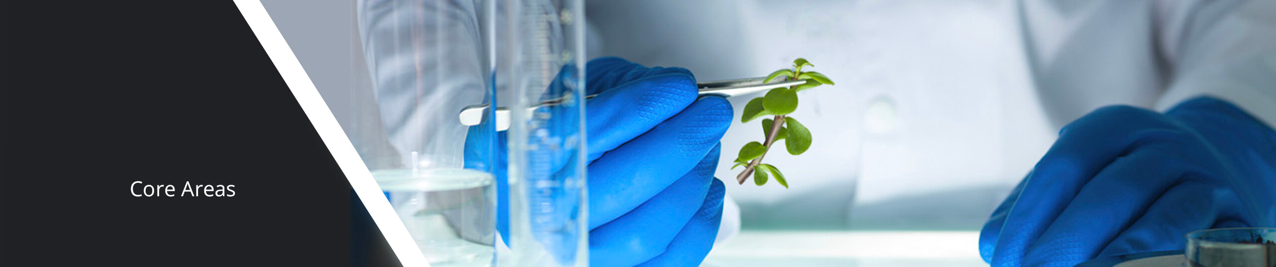 Scientist wearing gloves holding a plant stem with tweezers.
