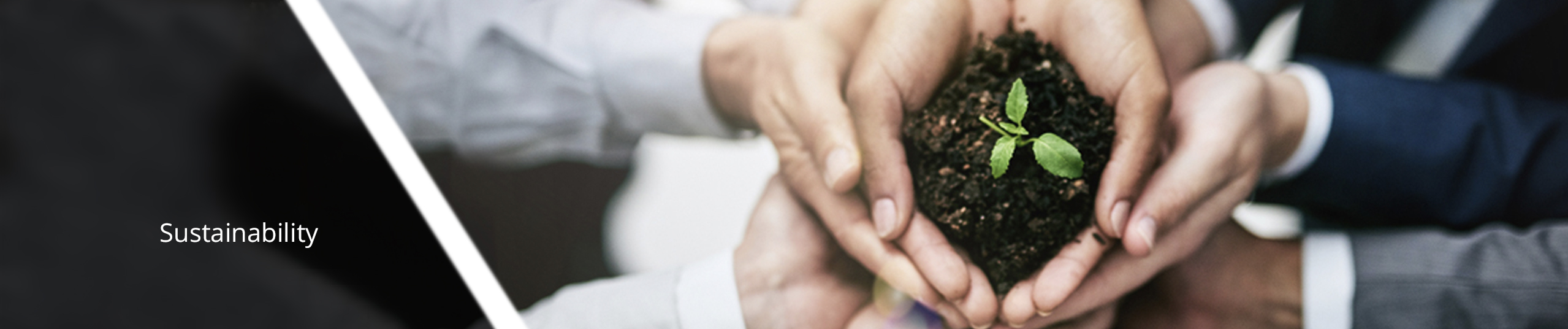 Hands holding seedling in soil.