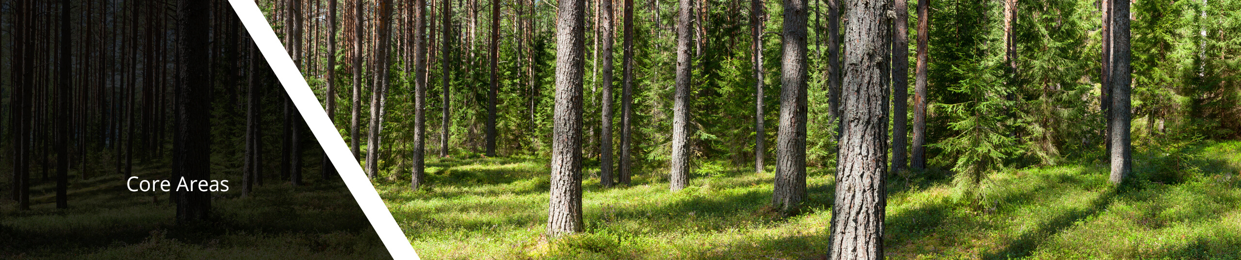 Summer forest panorama.