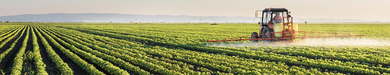 Tractor spraying crop field.