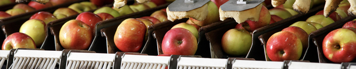 Apples being cleaned on conveyor belt.