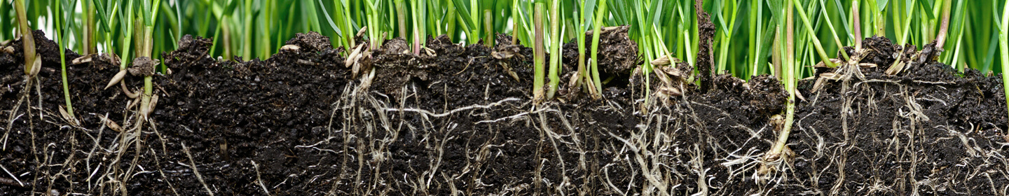 Grass with roots and soil.