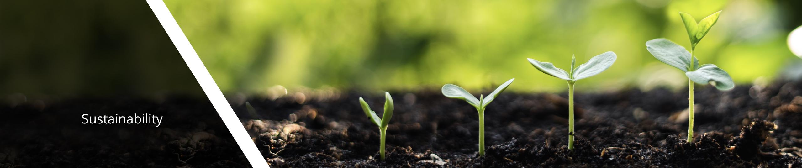 Seedlings growing in a row.